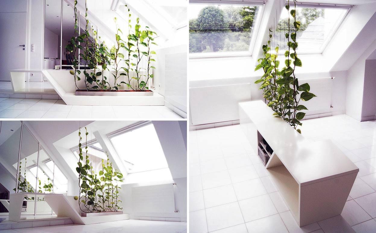 Зонирование кухни и гостиной при помощи растений