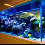 akvariumy
