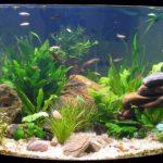 Заказ аквариума – шпаргалка для начинающих