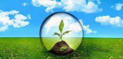 Растения в человеческой жизни